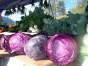 harvesttime0003