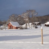 snowsnow0021